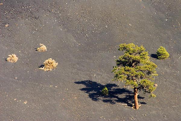 Trees Photograph - A Tough Neighborhood by Mike  Dawson