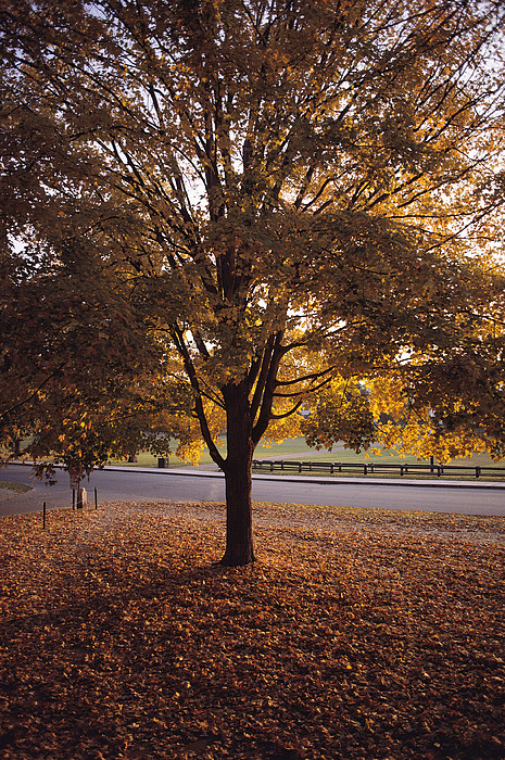 Schools Photograph - A Tree In Autumn Foliage On The Grounds by Sam Abell