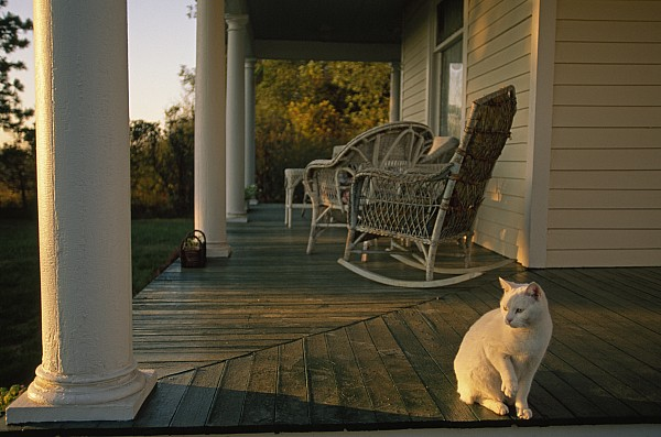 Outdoors Photograph - A White Cat In Sunlight On A Columned by Joel Sartore
