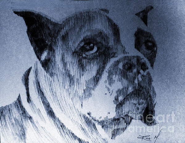 Boxer Drawing - Adopt Me by Robbi  Musser