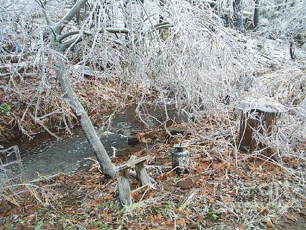 Ice Photograph - After The Ice Storm In Maine by Jeannie Atwater Jordan Allen
