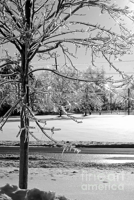 Ice Storm Photograph - After The Ice Storm by Lila Fisher-Wenzel