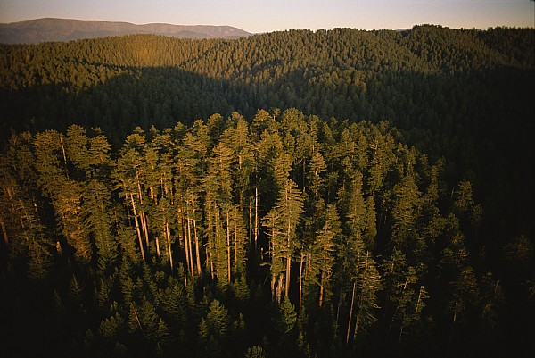 North America Photograph - Afternoon Sunlight Bathes Redwood Trees by James P. Blair
