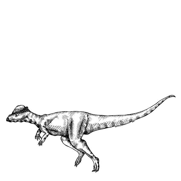 Cartoon Drawing - Alaskacephale Dinosaur by Karl Addison