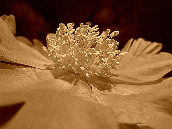 Flora Photograph - All My Glory by Shirley Sirois