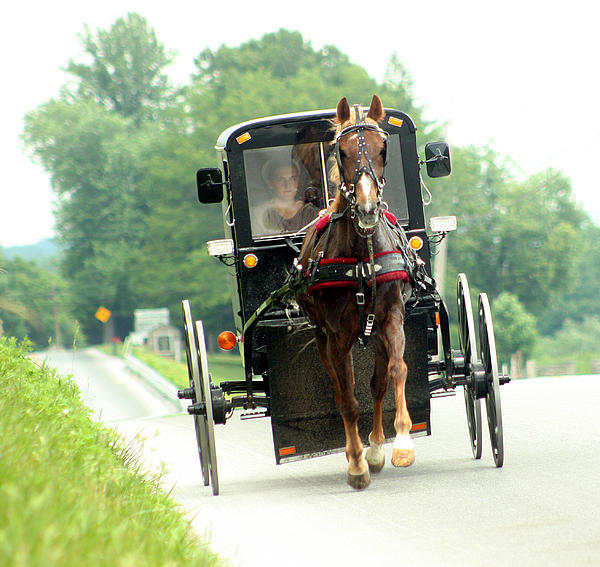 Amish Photograph - Amish Buggy On The Road by Emanuel Tanjala