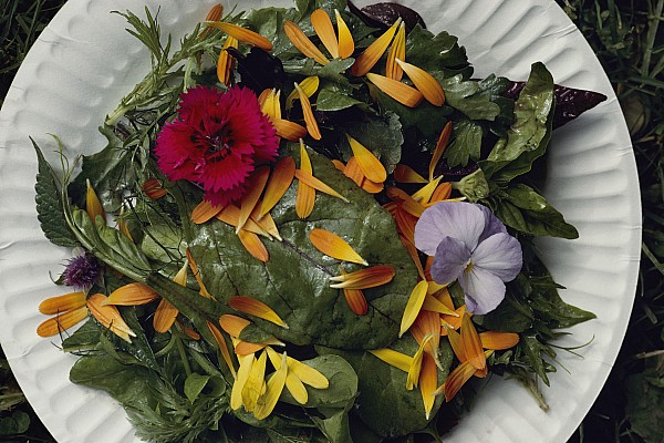 North America Photograph - An Edible Salad At The Tilth Harvest by Sam Abell