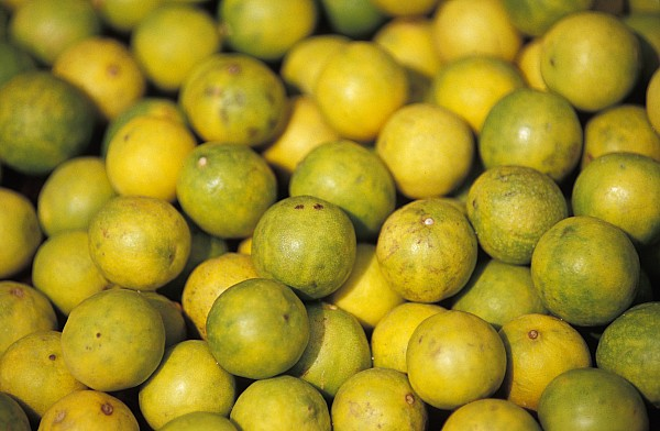 Lemon Photograph - An Enticing Display Of Lemons by Jason Edwards