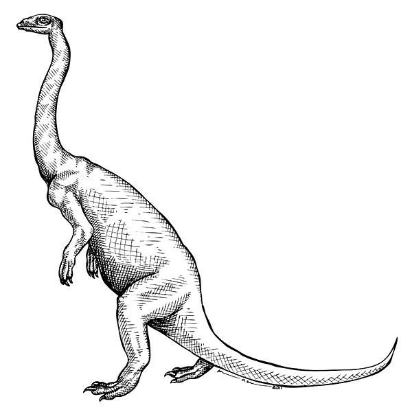 Cartoon Drawing - Anchisaurus - Dinosaur by Karl Addison