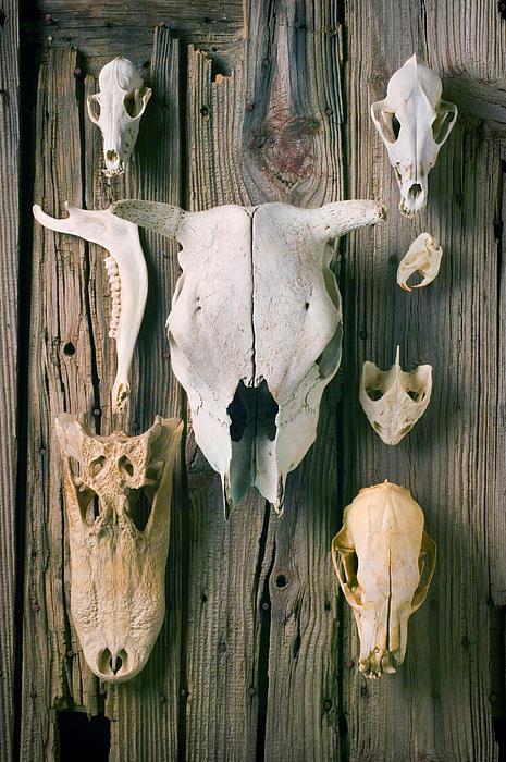 Skull Photograph - Animal Skulls by Garry Gay