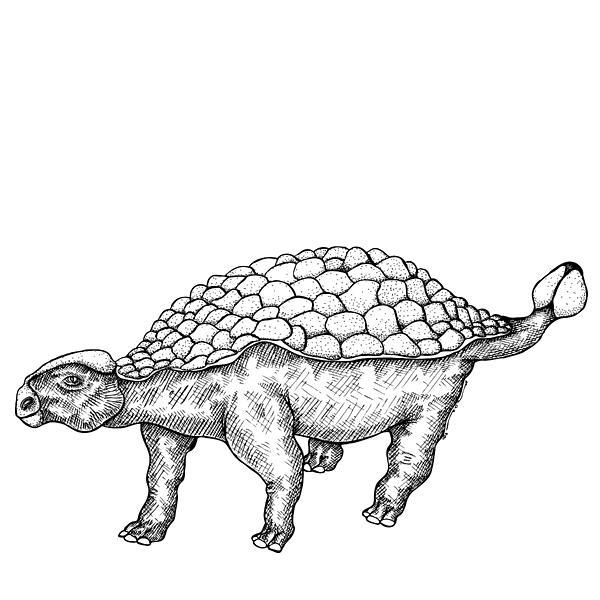 Cartoon Drawing - Ankylosaurus - Dinosaur by Karl Addison