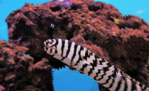 Fish Photograph - Aquarium Art 14 by Steve Ohlsen