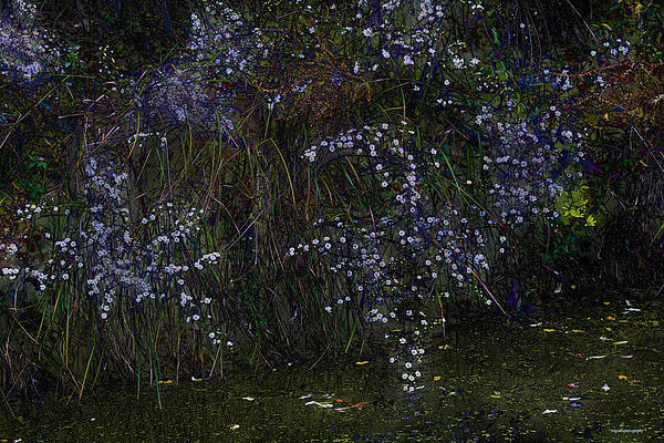 Flowers Photograph - Aster Days by Ron Jones