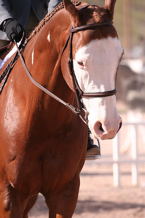 Horse Photograph - At The Show by Wendi Matson