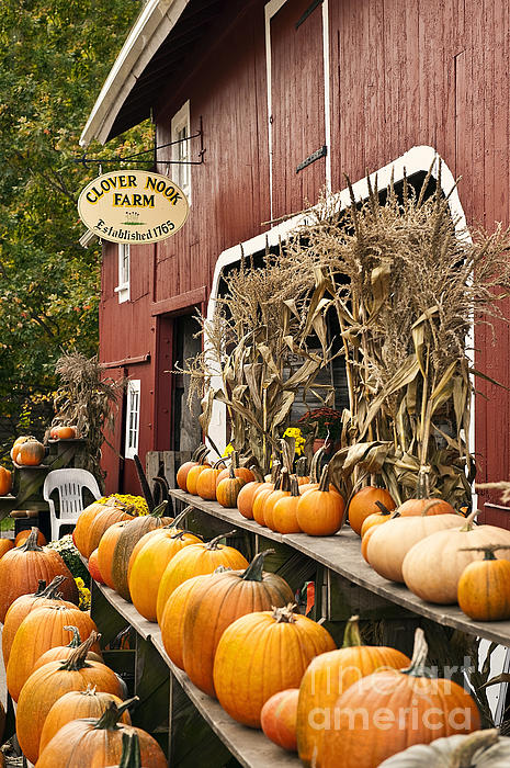 Connecticut Photograph - Autumn Farm Stand  by John Greim