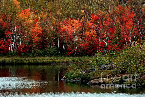 Autumn Photograph - Autumn In Canada 2 by Marjorie Imbeau