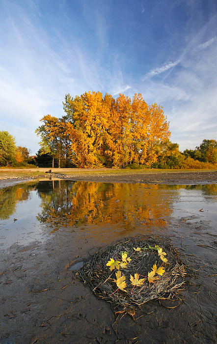 Autumn Photograph - Autumn Nest by Mircea Costina Photography