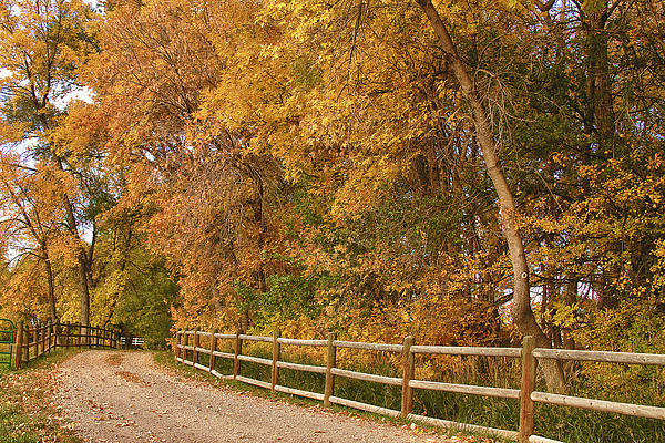 Red Photograph - Autumn  Road To The Ranch by James BO  Insogna