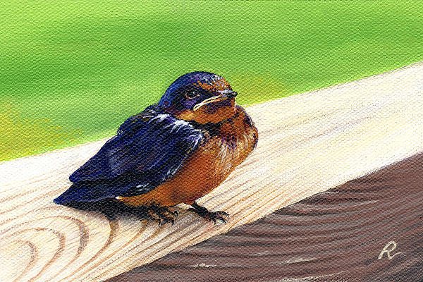 Bird Painting - Baby Barn Swallow by Peggy Dreher