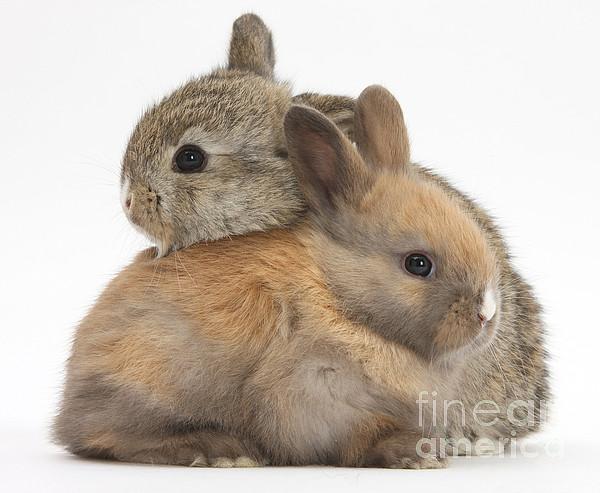 Animal Photograph - Baby Rabbits by Mark Taylor
