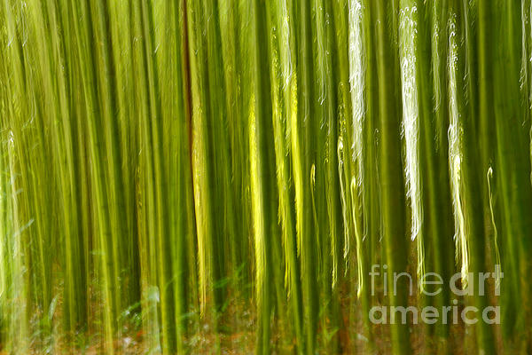 Abstract Photograph - Bamboo Abstract by Gaspar Avila