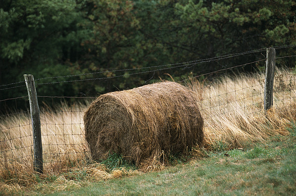 North America Photograph - Barbed Wire Fence And Hay Roll by Raymond Gehman