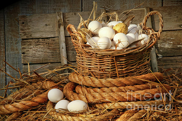 Agriculture Photograph - Basket Of Eggs On Straw by Sandra Cunningham