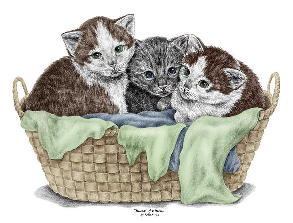 cat drawing basket of kittens cats art print color tinted by kelli swan