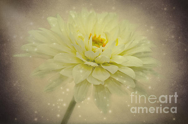 Dahlia Photograph - Be A Star by Angela Doelling AD DESIGN Photo and PhotoArt