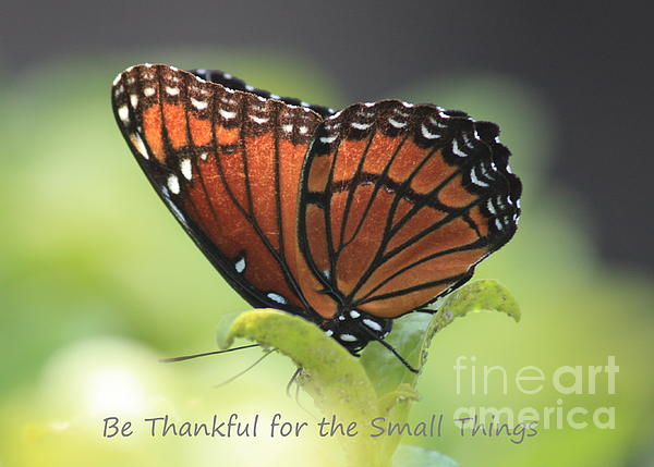 Butterfly Photograph - Be Thankful by Carol Groenen