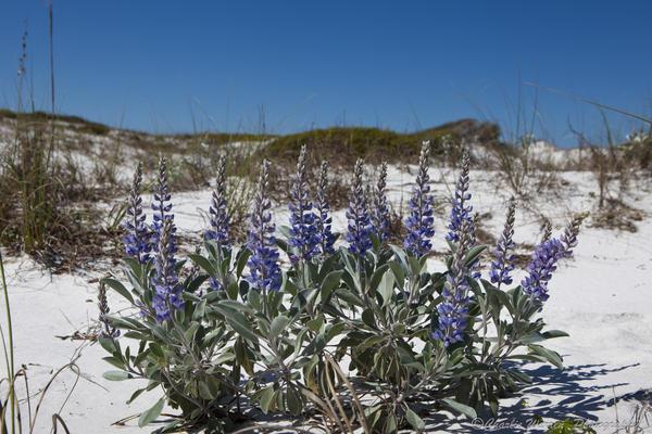 Beach Photograph - Beach Flora by Charles Warren