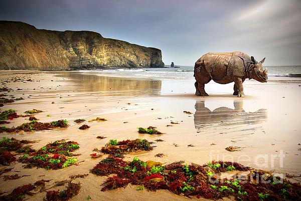 Africa Photograph - Beach Rhino by Carlos Caetano