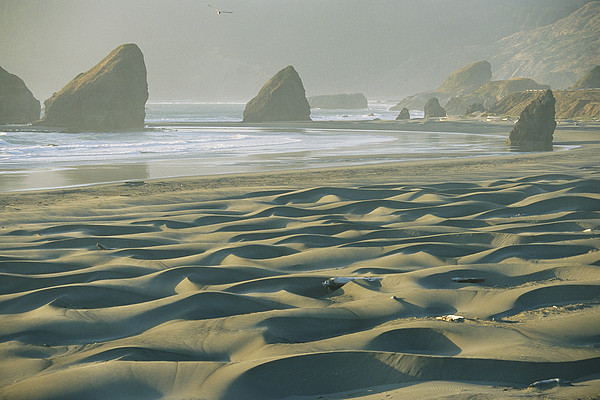 Geography Photograph - Beach With Dunes And Seastack Rocks by Skip Brown