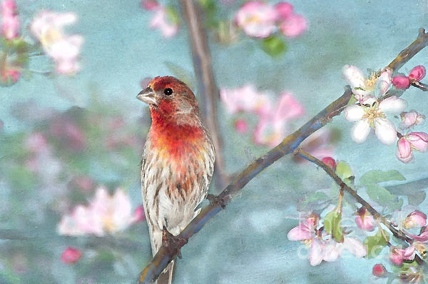 Avian Photograph - Beautiful Spring by Betty LaRue