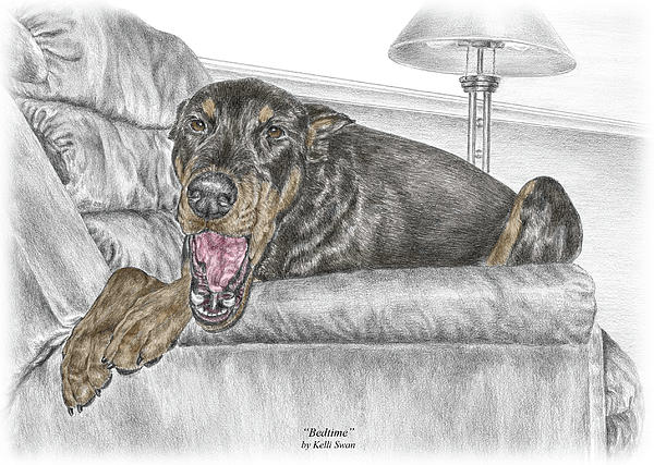 Doberman Drawing - Bedtime - Doberman Pinscher Dog Print Color Tinted by Kelli Swan
