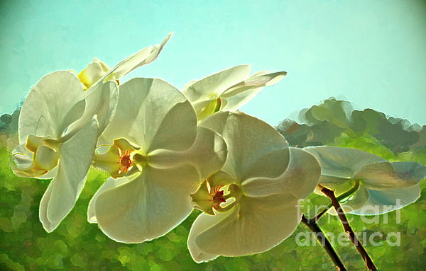 Orchid Photograph - Belleza Blanca by Gwyn Newcombe
