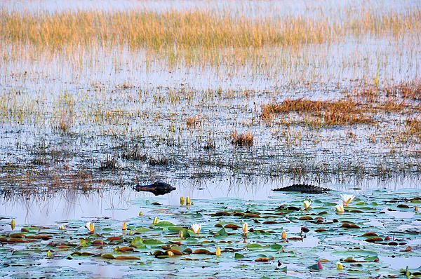 Reptiles Photograph - Beware Of Still Waters by Jan Amiss Photography
