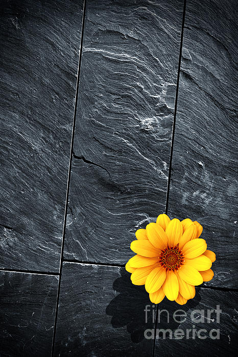 Abstract Photograph - Black Schist Flower by Carlos Caetano