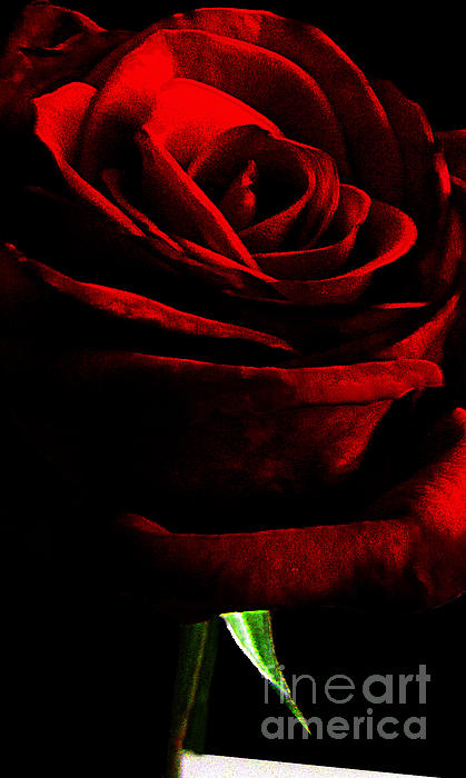 Red Photograph - Black Shadows On Red Rose by EGiclee Digital Prints