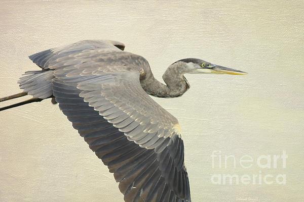 Blue Heron Photograph - Blue Heron On Canvas by Deborah Benoit