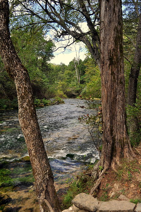 Stream Photograph - Blue Spring Branch by Marty Koch