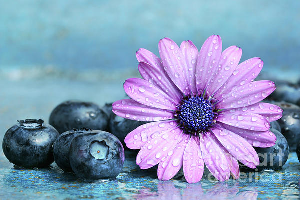 Agriculture Photograph - Blueberries And Daisy by Sandra Cunningham