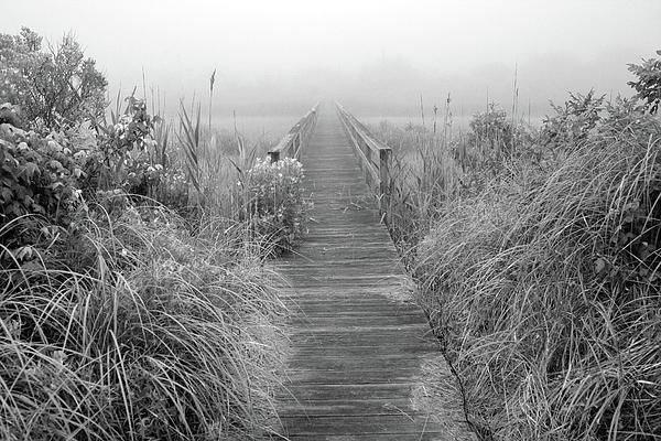 Long Island Photograph - Boardwalk In Quogue Wildlife Preserve by Rick Berk