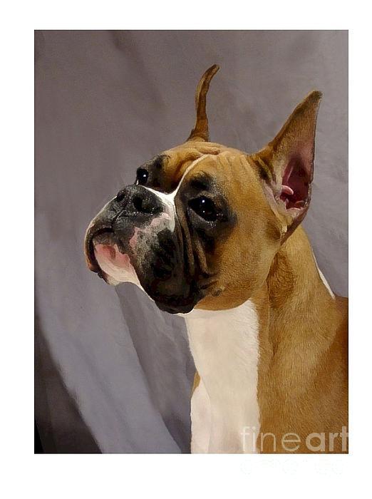 Boxer Digital Art - Boxer 413 by Larry Matthews