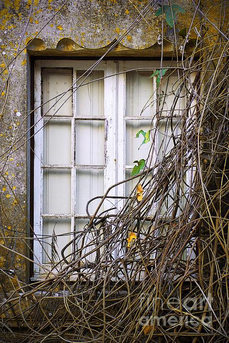 Autumn Photograph - Branchy Window by Carlos Caetano