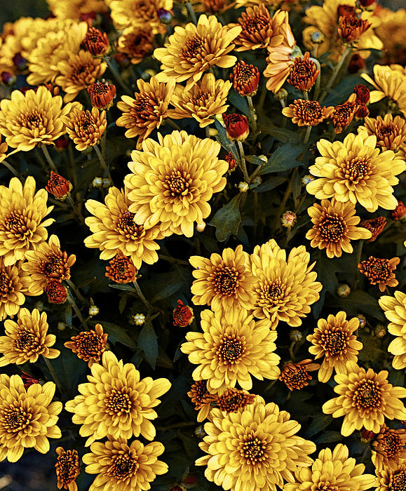 Agriculture Photograph - Bunch Of Flowers by Malania Hammer