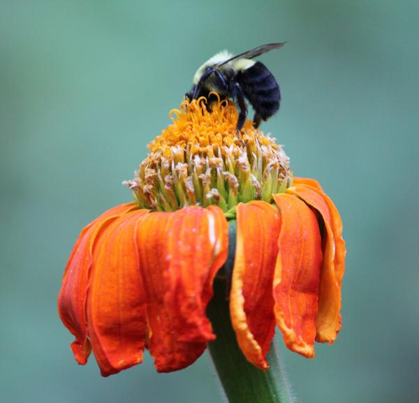 Photo Photograph - Busy Bee by Marilyn West