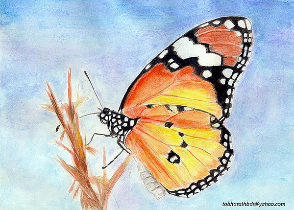 Butter Fly Drawing - Butterfly by Bharath Reddy