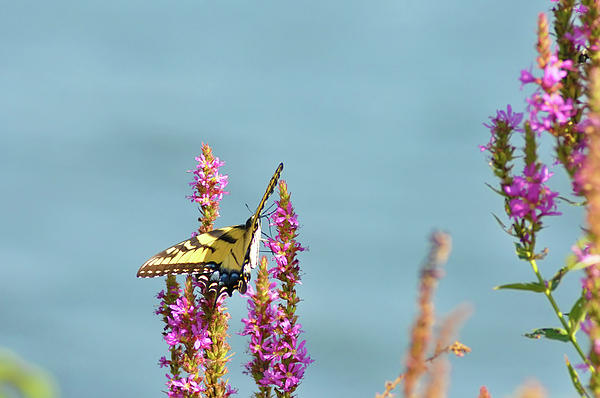 Butterfly Photograph - Butterfly Morning by Bill Cannon