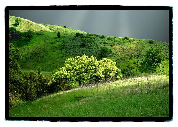 Calabasas Photograph - Calabasas Meadow After The Storm by Noah Brooks